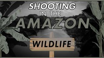 S30: Filming with Wildlife