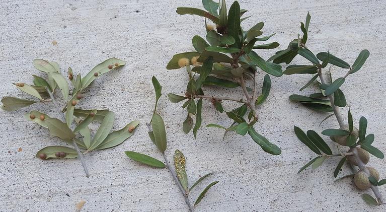 Central Texas Gardener: Top Tree Questions