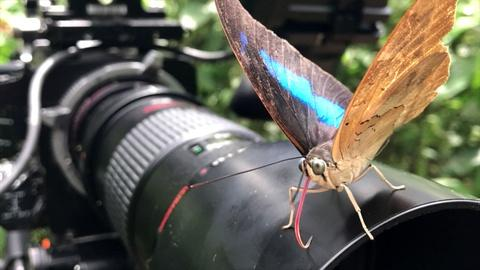 Nature -- Filming Beautiful Butterfly Footage