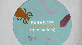 How parasites make a living