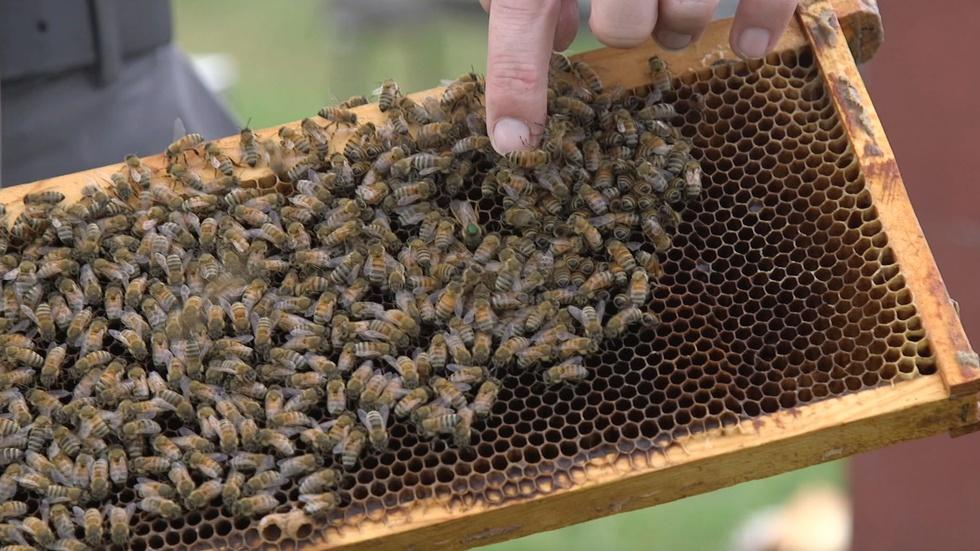 Helping Bees Help Themselves image