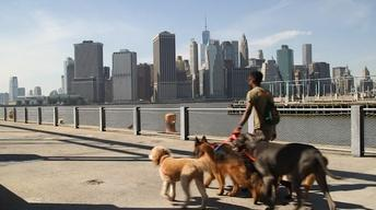My Everyday Hustle: The Dog Walker