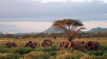 Next on Episode 1 | Elephants