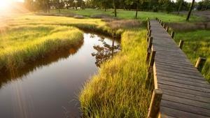 Three reasons to value salt marshes