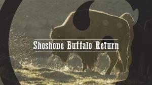 Shoshone Buffalo Return