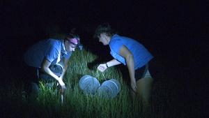 What happens in a marsh at night
