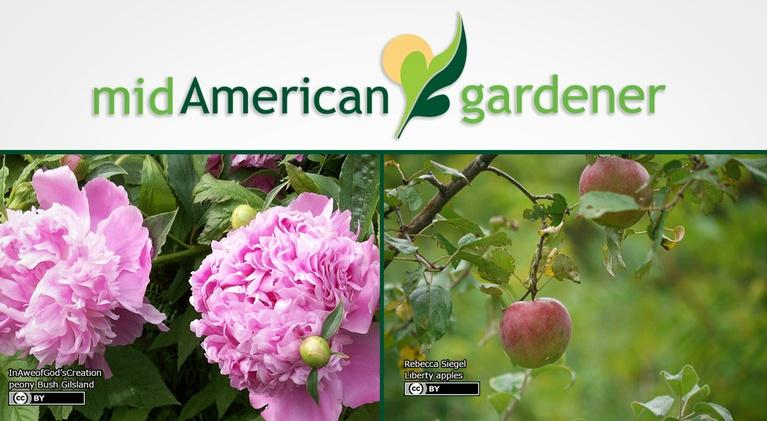 Mid-American Gardener: Mid-American Gardener with Sandy Mason November 16, 2017
