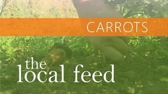 Carrots | Laughing Earth