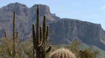 Arizona Stories 101