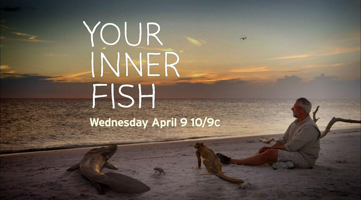 Video your inner fish watch arizona pbs previews online for Your inner fish