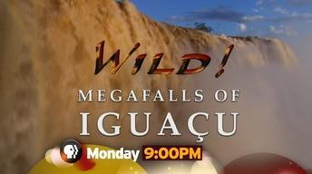 """Wild! """"Megafalls of Iguaco"""""""
