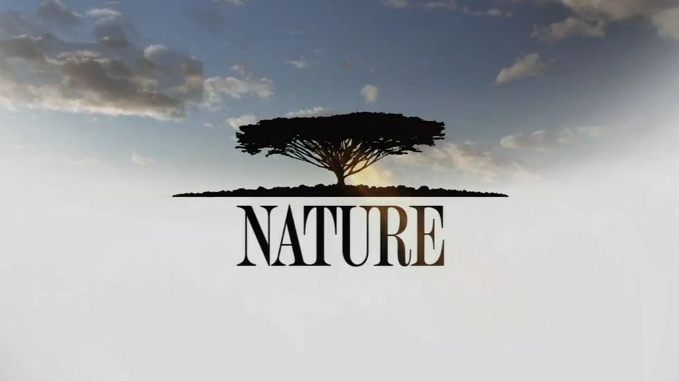Nature: Great Zebra Exodus image