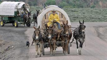 Horse Packers & Wagon Masters