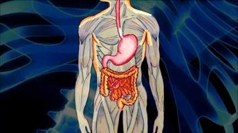 The Web Show: Digestive System