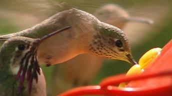 Birders Banders Binoculars (Outdoor Idaho)
