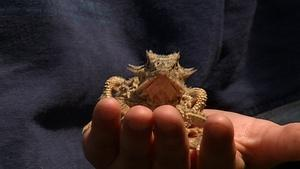 Horned Lizards, Young Guns & Outdoor Ethics