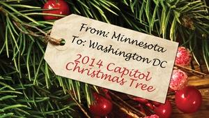 From MN to Washington DC The 2014 Capitol Christmas Tree