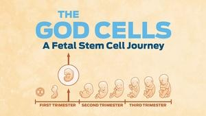 The God Cells: A Fetal Stem Journey