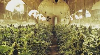 Marijuana's Legal in Colorado: Now What?
