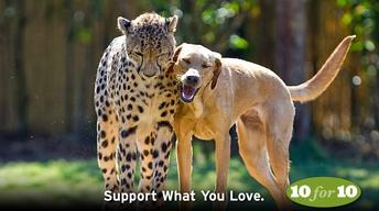 Support What You Love in July   KCTS 9