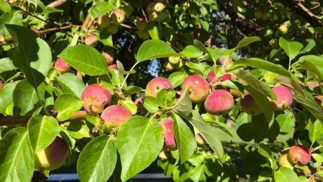 Wyoming Apple Project