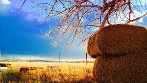 Farm To Fork Wyoming -  Restoration Farming in Cody