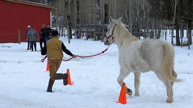 Horse Warriors