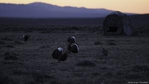 Wyoming Perspectives - Sage Grouse