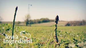 Iowa Ingredient | Asparagus