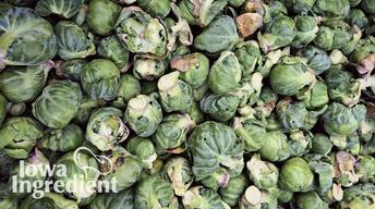 Brussels Sprouts | Iowa Ingredient