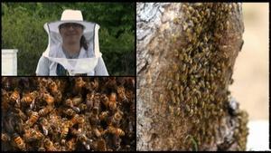 Oklahoma Road Trip: Bees and Honey