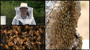 Oklahoma Road Trip: Bees and Honey