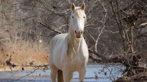 Wild Horses Montage