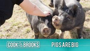 Cook With Brooks: Pigs Are Big