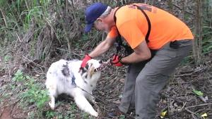 Top Story: Chiefess Kamakahelei Middle-Search Rescue K9 Team