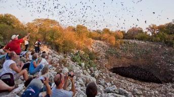 June 7, 2013  | Bat Cave Controversy