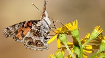 Holistic Pollinator Habitat