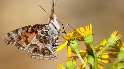Holistic Pollinator Habitat Video Thumbnail