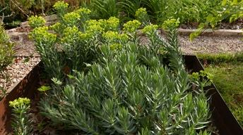 Spring into Summer Annuals & Perennials