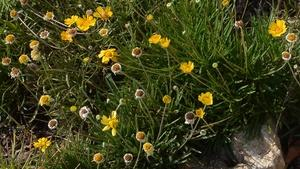 Wild About Wildflowers & Native Plants All Year