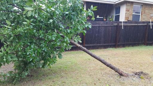 Key Tips for Picking & Planting Trees Video Thumbnail