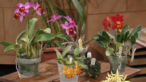 Orchids Made Easy Video Thumbnail