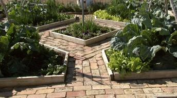 Resolution Gardens Fall Vegetables