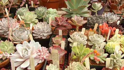 Succulent Designs Video Thumbnail