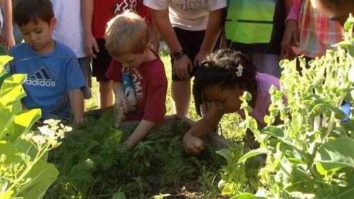 Cool-weather Vegetable Garden Video Thumbnail