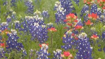Wildflowers   Seeds of History