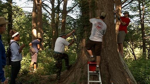 Cypress Trees, Garner Traditions & Canoes. Video Thumbnail