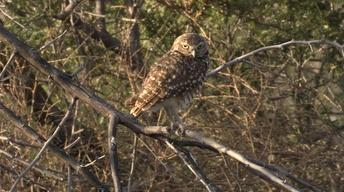 El Paso's Owls, Three Kingfishers & Richland Creek Water