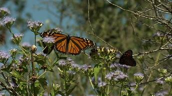 Butterfly Beauty, Enchanted Rock & the Inspiring Ecologist