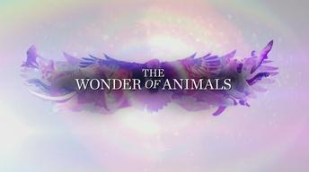 The Wonder of Animals Promo